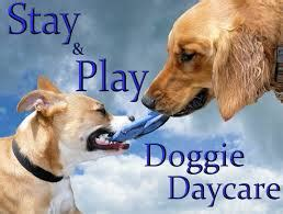 dog attack news dog daycare dog boarding and dog blog attorney thomas newell www padogattacklawyer com