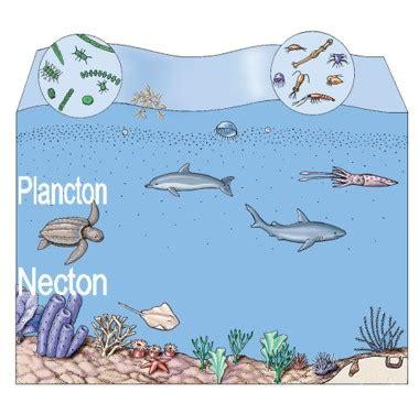 catena alimentare mare reti trofiche in mare