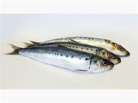 cucinare sardine sardine in saor ricetta