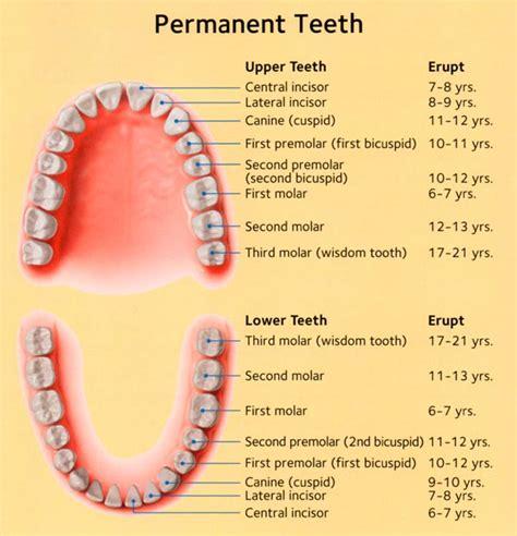 comfort dental lafayette co comfort dental lafayette colorado 28 images implant