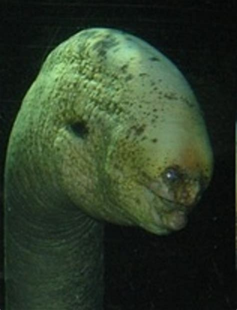 this deep sea eel is your nightmare : creepy