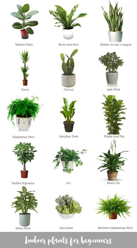 types of indoor plants indoor plants for beginners