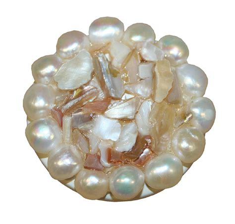 Shell Drawer Pulls by Shell Pearl Drawer Knob By Country Cottage