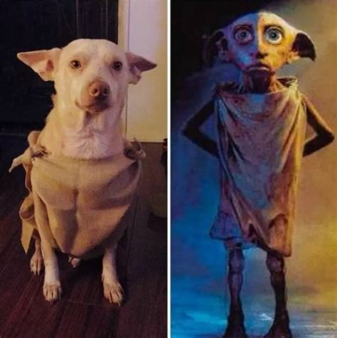 awesome homemade halloween pet costumes pets