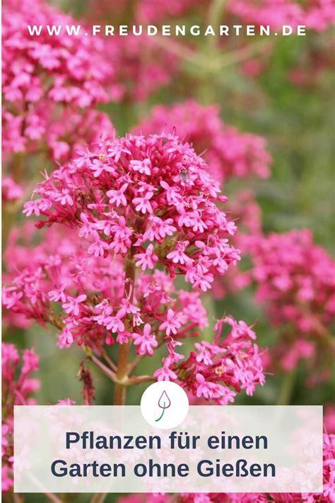 Einen Garten Zu Pflanzen by Pflanzen Die Du Nicht Zu Gie 223 En Brauchst