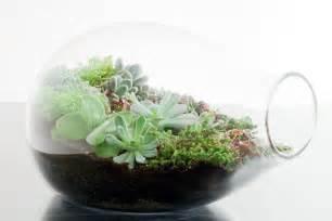 ett 233 studios diy terrarium roundup