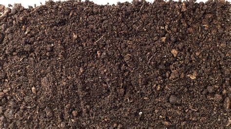 mold in compost what causes potting soil to grow mold reference