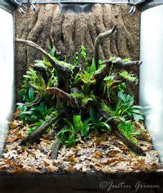 orchidarium images   vivarium planted