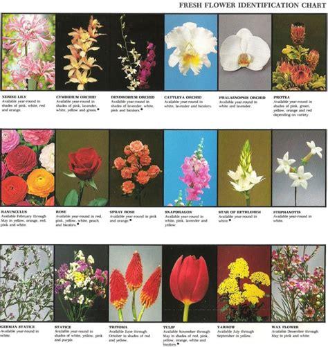 fresh flower identification chart  great printout