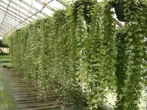 hanging plants hanging plant lo fi lounge pinterest