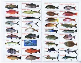 Florida saltwaterfish identification chart