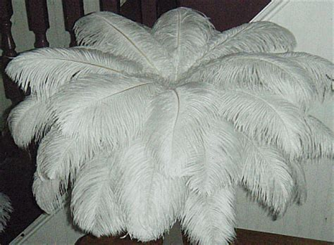 large ostrich drab feather centerpiece kit for sale by