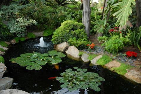Koi Garden by Koi Fish Lotus Pads Garden Koi Pond Med