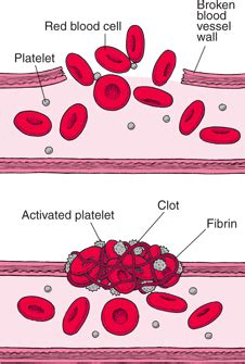 how blood clots blood disorders merck manuals consumer