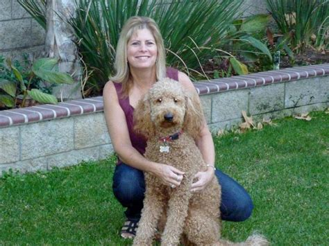 goldendoodle puppy california goldendoodle hugs home southern california goldendoodles