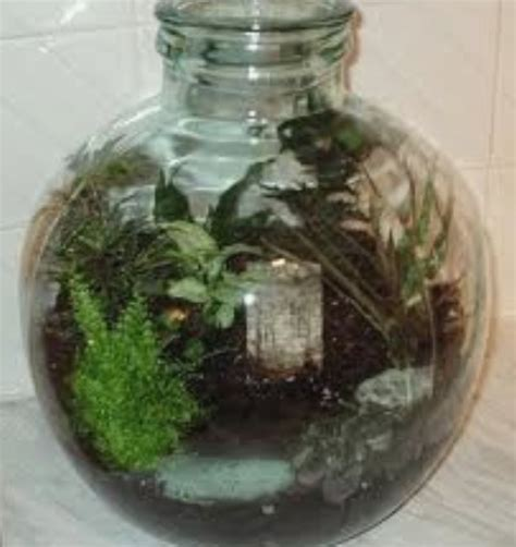 garden in a bottle ferns growing in wardian cases and bottle gardens