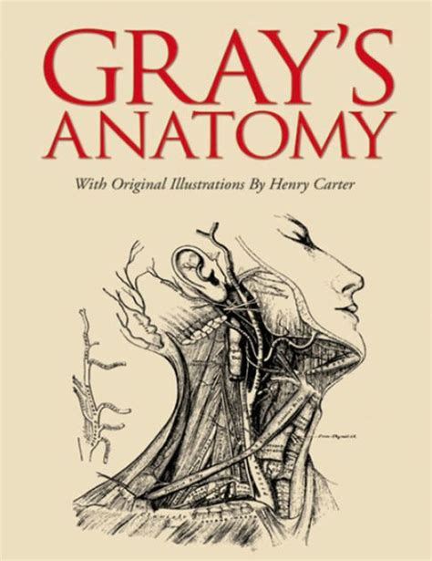 anatomy picture book gray s anatomy by henry gray hardcover barnes noble 174