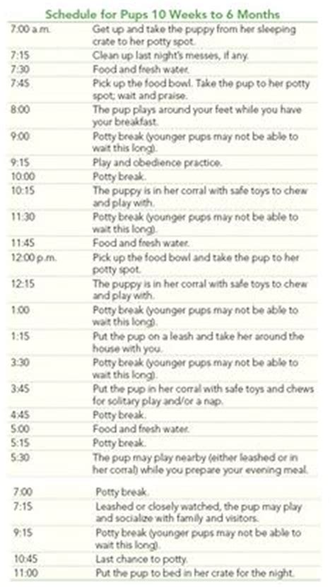 what is the schedule for puppy 1000 ideas about puppy schedule on puppy crate new puppy and new puppy