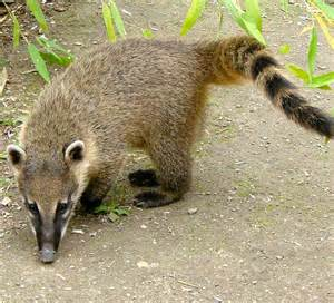 arizona kudamundi animal related keywords suggestions