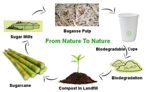 How To Make Paper From Sugarcane Bagasse - what we use sugar bagasse coffee cups tree free nz