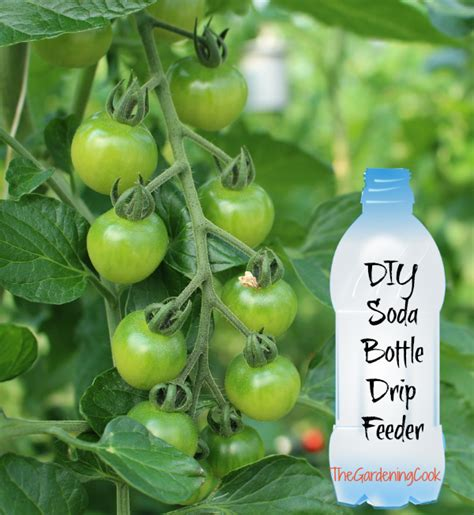 Soda Bottle Drip Feeder for Plants   Water Plants with a