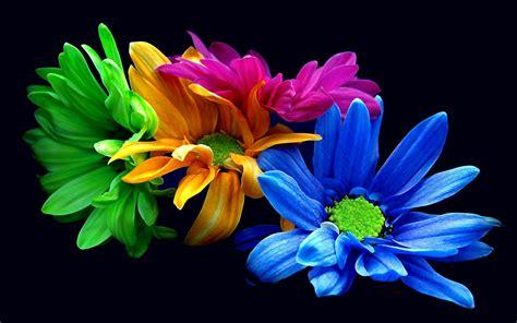 earth flower blue opus green orange leaf