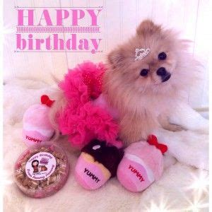 pomeranian birthday 54 best images about pomeranian birthday on birthday cakes shops and
