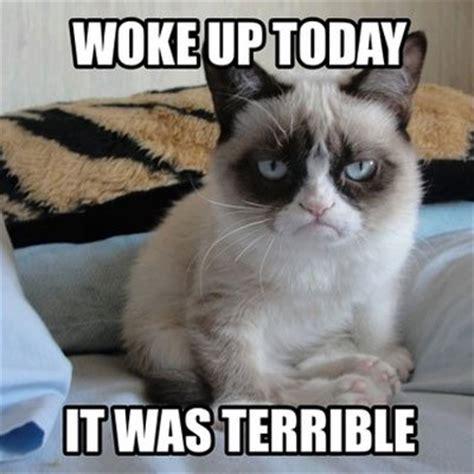 Lesbian Cat Meme - 1000 images about some e cards on pinterest lesbian