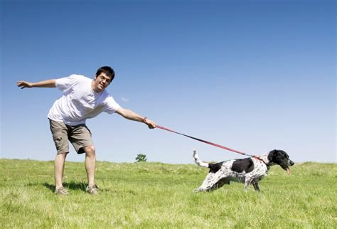 how does it take for puppies to walk want to burn belly fast start using these 5 easy tips