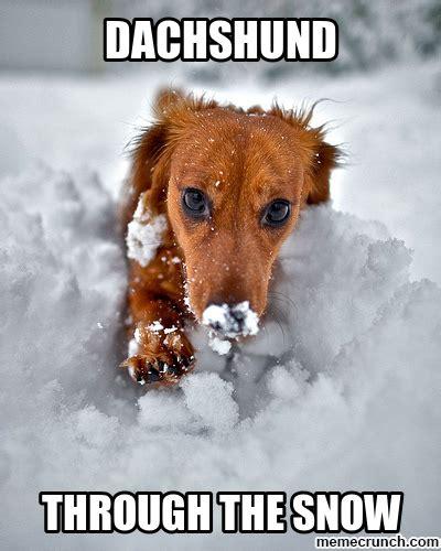 Dachshund Meme - dachshund birthday meme dog breeds picture