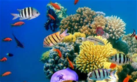 Coral Reef Research Paper by Steps To Make A Title Page For A Research Paper Vv Gdc