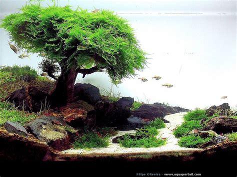 Aquascape Fish by Aquascape Aquarium D Aquascape Japonais Aquariums