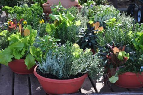 patio vegetable garden containers vegetable gardening and growing tips survival