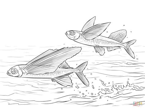 Flying Fish Coloring Page sailfin flying fish and common atlantic flying fish