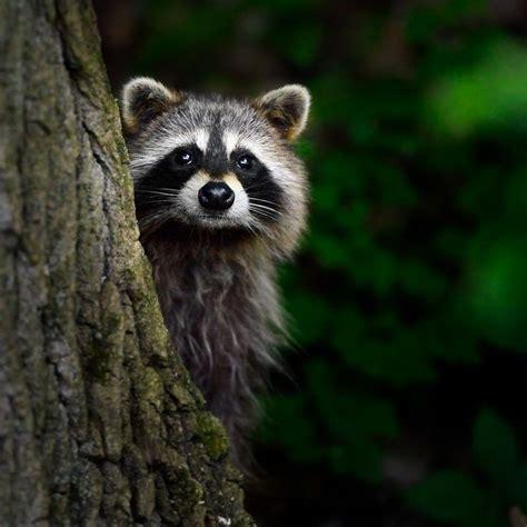 Tshirt Natgeo Wildlife 17 best images about spirit animal on