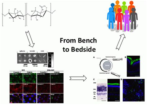 from bedside to bench polymers free full text low molecular weight chitosan