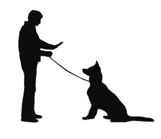 trouble house training dog professional dog obedience training including behaviour problems puppy house training