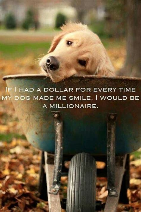 heart warming dog quotes  life  love fallinpets