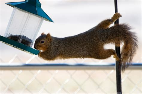 pictures of bird feeders to keep squirrels out apps