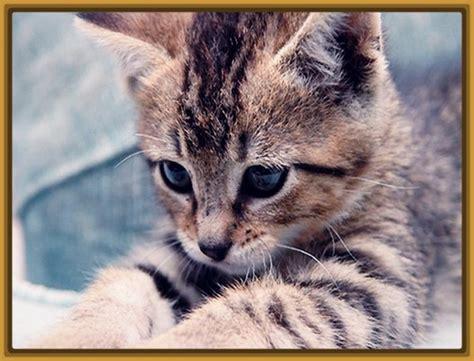 imagenes gatitos hermosos las bonitas fotos de gatitos hermosos gatitos tiernos