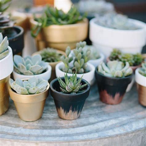 succulent pots best 25 succulent pots ideas on pinterest succulent