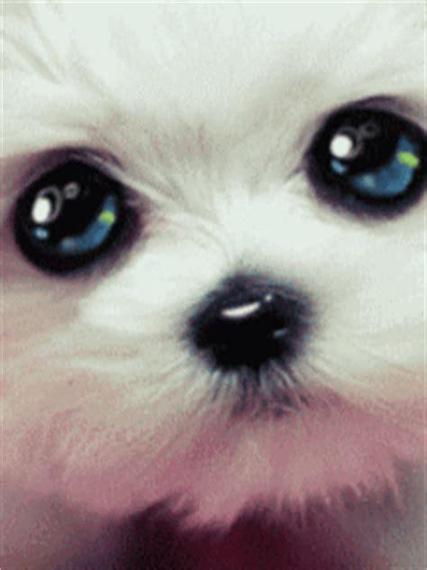 fotos para perfil do imvu imvu minha p 225 gina de avatar sunpuppi