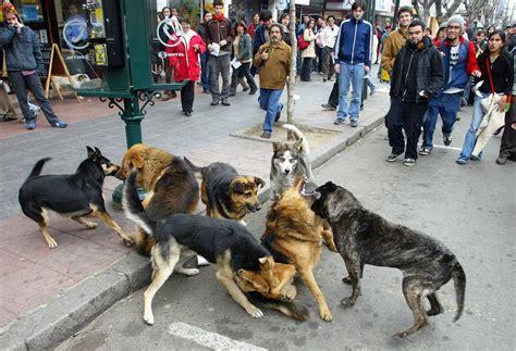 mujer con un perro mas grande los perros de valpara 237 so 183 el boomeran g