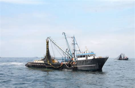 peru seafood fishing industry companies d j info peru fishing association rejects accusations against its