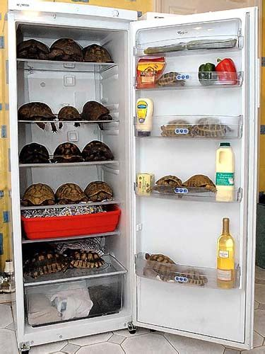 lada per tartarughe di terra found 187 fridge amazing pictures