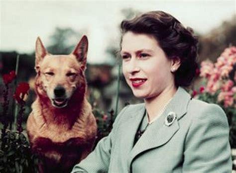 queen elizabeth s dog エリザベス女王が コーギー を好きすぎて話題に ガールズちゃんねる girls channel