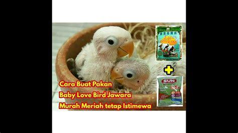 Jawara Gr 12 Murah cara buat pakan lolohan bird jawara murah meriah tetapi istimewa