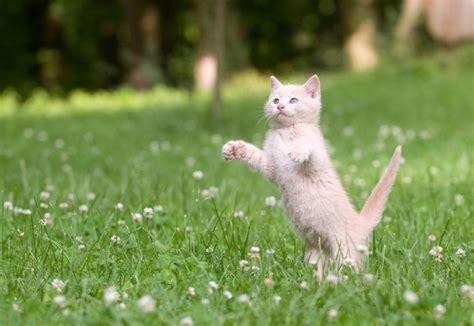 ab wann kann ein kater kastrieren lassen die katze meister der 220 bersprungshandlung deinetierwelt
