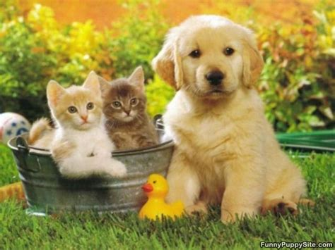 puppy and kitten pictures omg these pictures of puppies and kittens are soooooooo adorable aren t i right