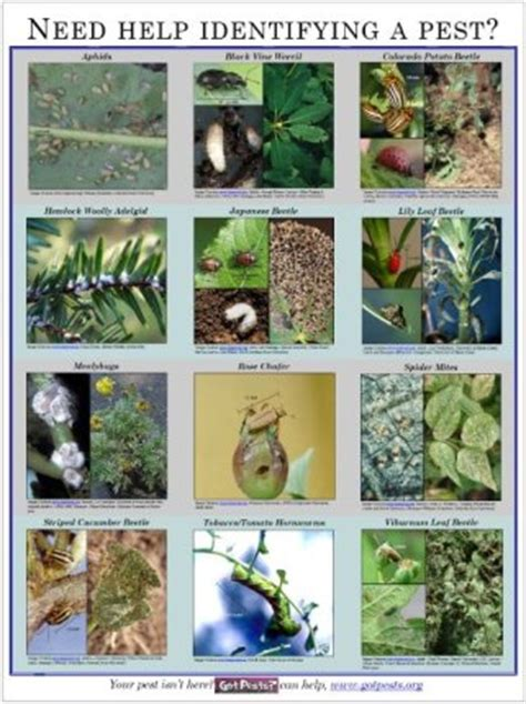 garden pests in the soil identification pest id poster horticulture aph maine acf